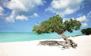"""""""Tropical Paradise"""", Aruba, Eagle Beach, Divi Divi Trees"""